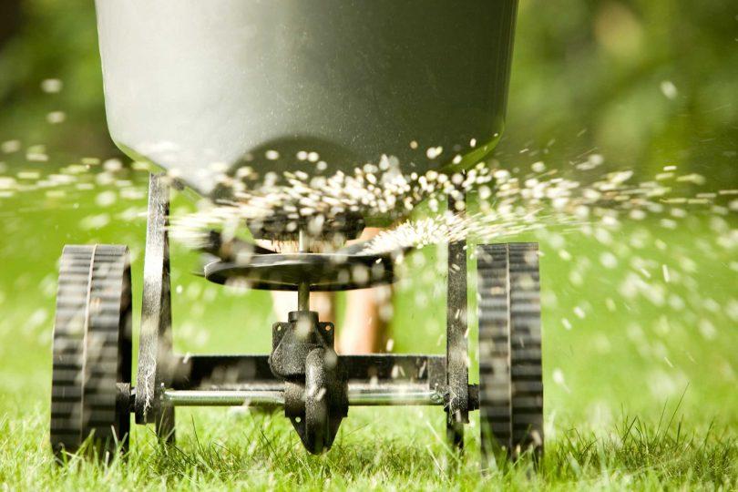 Посадка газона осенью лучшее время для посева