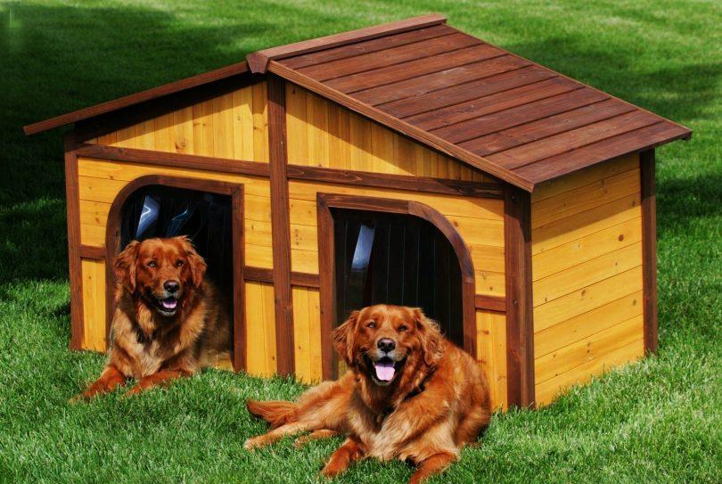 Для двух собак
