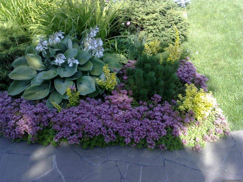 цветы с большими листьями