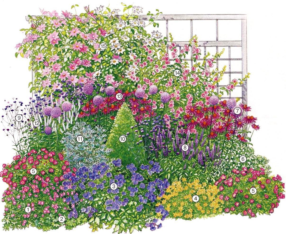 Схема цветка на клумбе фото 848