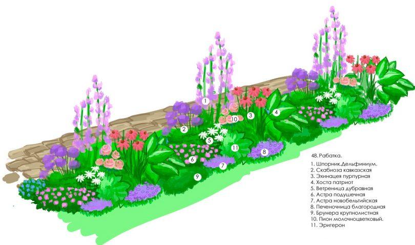 схема цветника из многолетников