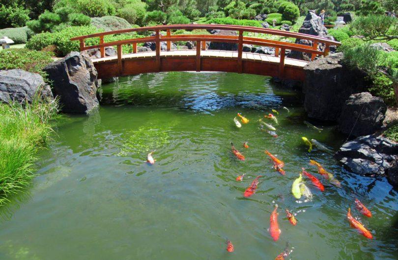 Большой пруд с мостиком