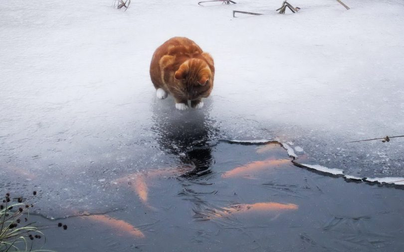 Прорубь для жизни рыбы