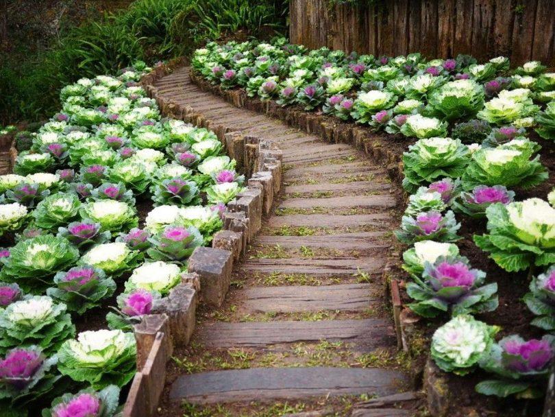 цветы как капуста