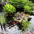 Какие выбрать растения для пруда