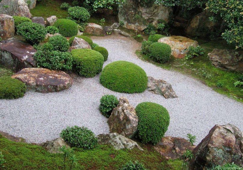 растения ландшафтный дизайн