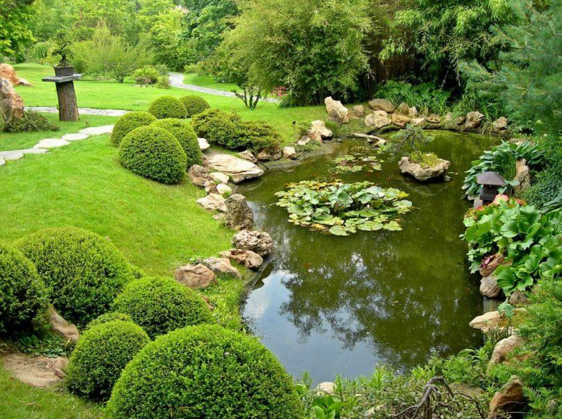 водные растения названия