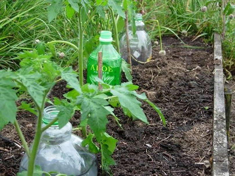 полив через пластиковые бутылки