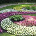 Рабатка — необычный цветник