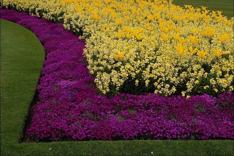 рабатки из цветов