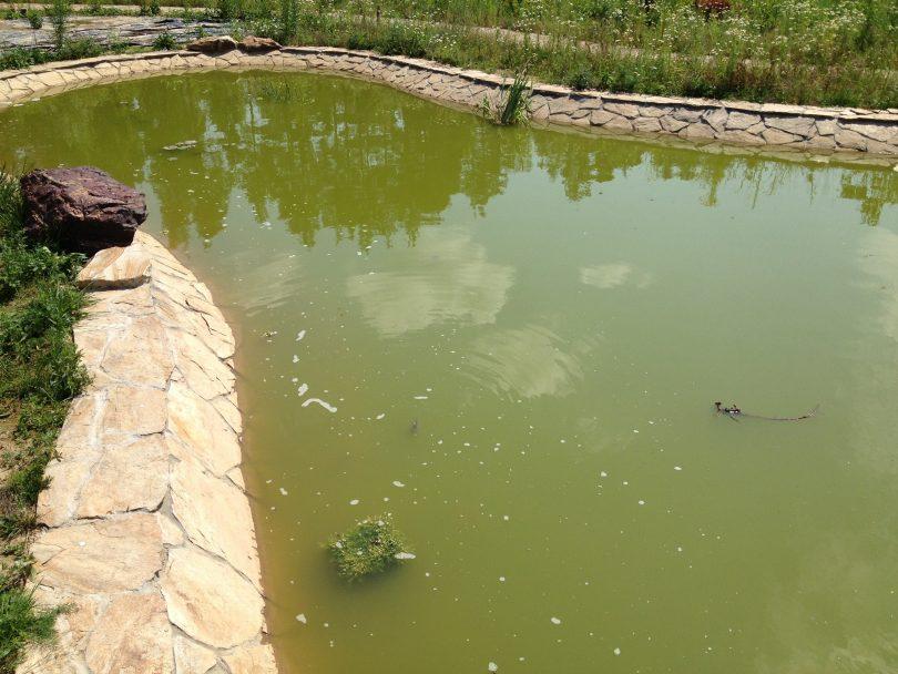 очистка пруда на даче