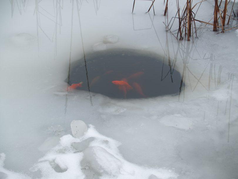 кормушка для рыбы в пруду
