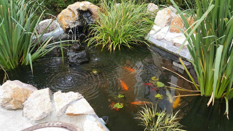 маленький прудик с рыбками