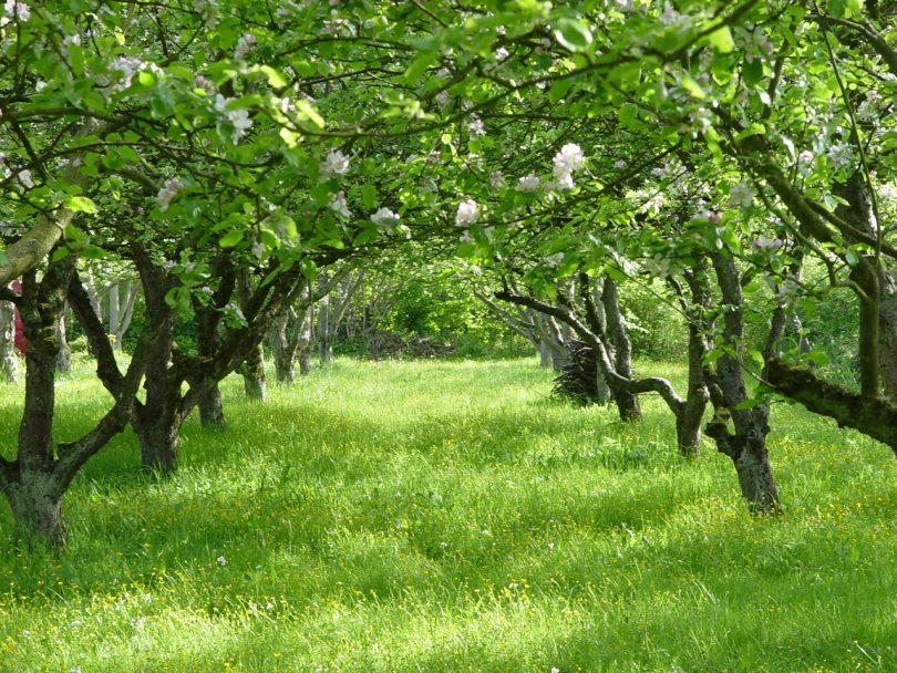 оформление плодового сада