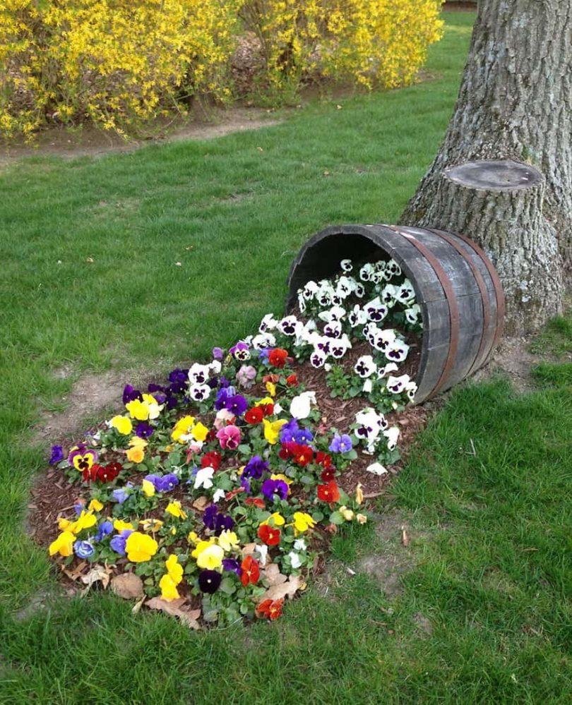 плодовый сад уход