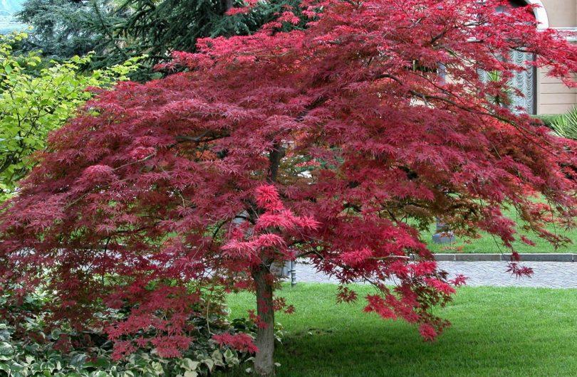 ландшафтный дизайн посадка деревьев