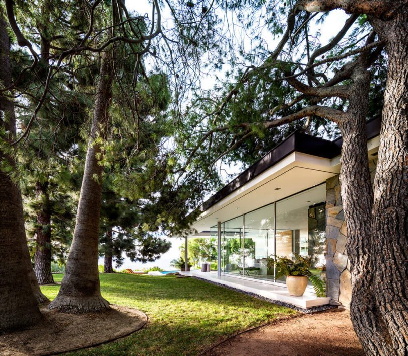 деревья в ландшафтном дизайне