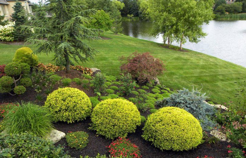 ландшафтный дизайн из хвойных растений