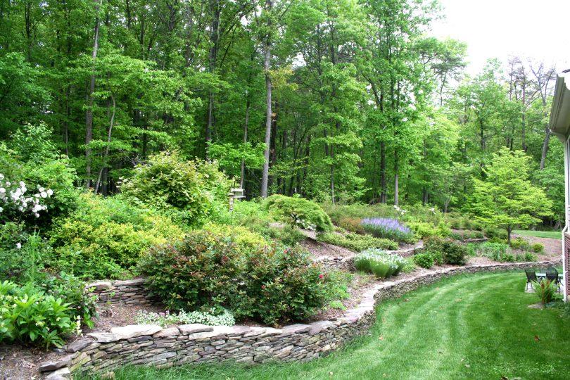 правила озеленения участка