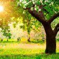 Выбор деревьев для участка