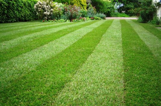 газон как правильно посадить