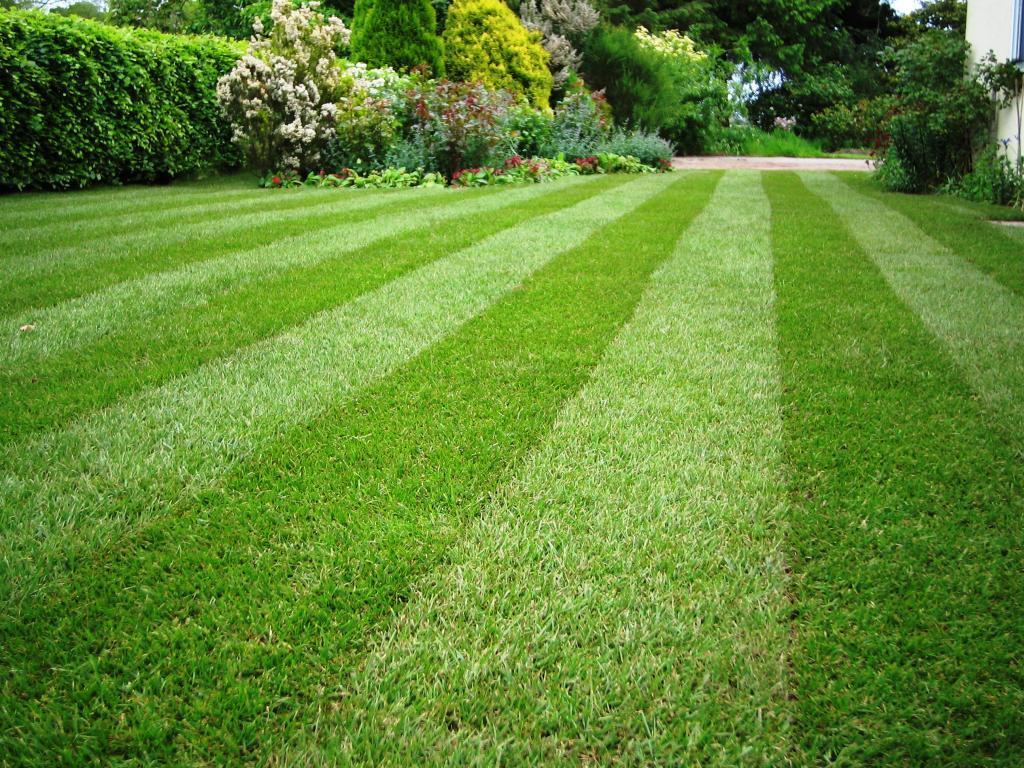 Как засеять участок газонной травой