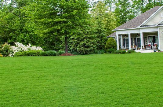 газон как посадить