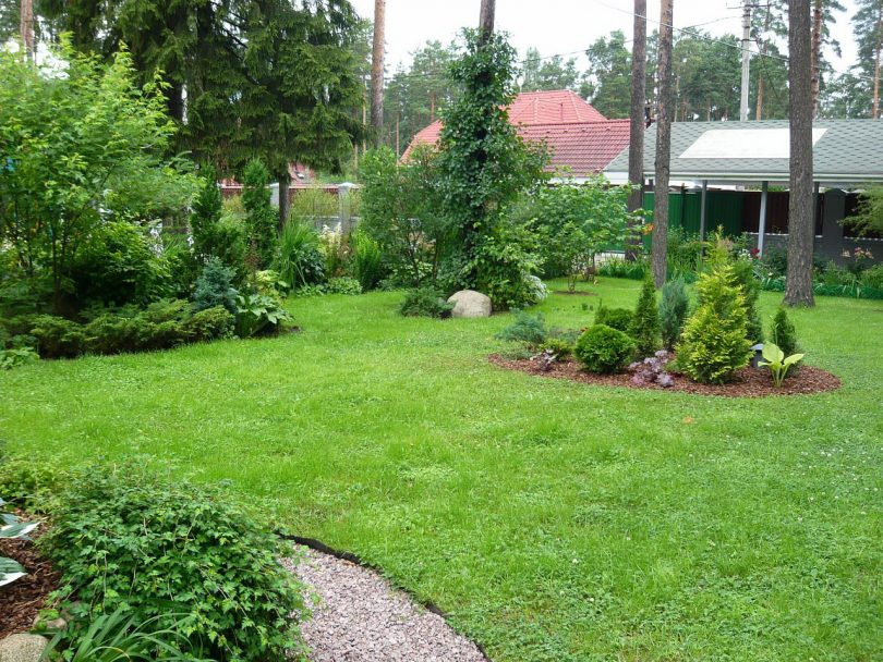 газон как сделать