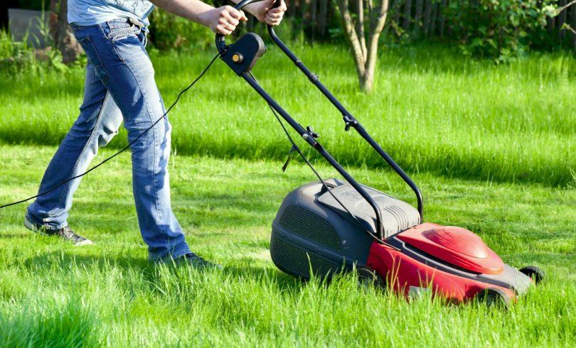 посадка газона технология