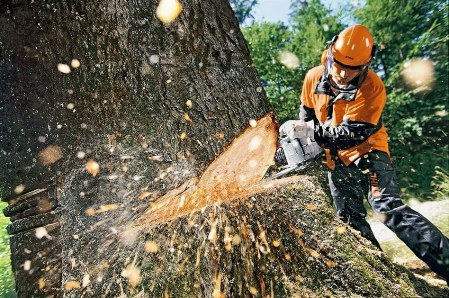 Как правильно осуществить спил деревьев