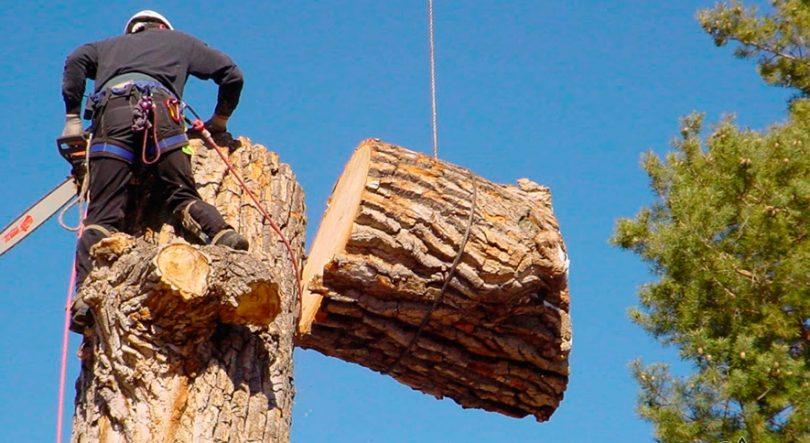 валка деревьев удаление