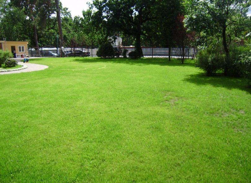 газон без газонокосилки