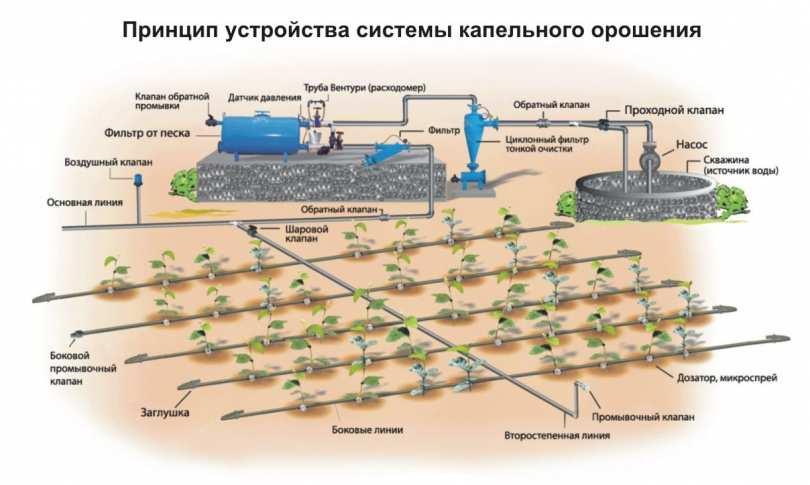 Автоматизация полива с помощью систем капельного орошения