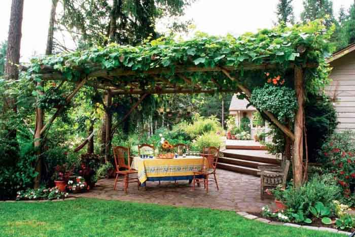 Обрезка винограда на беседке осенью