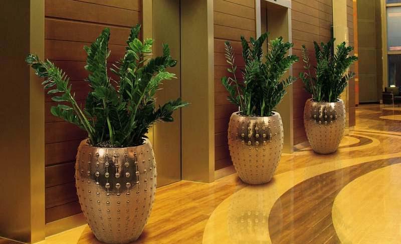 Замиокулькас – растение, пахнущее деньгами