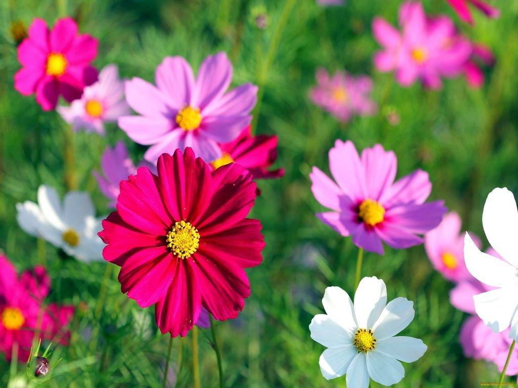 Сорт цветка