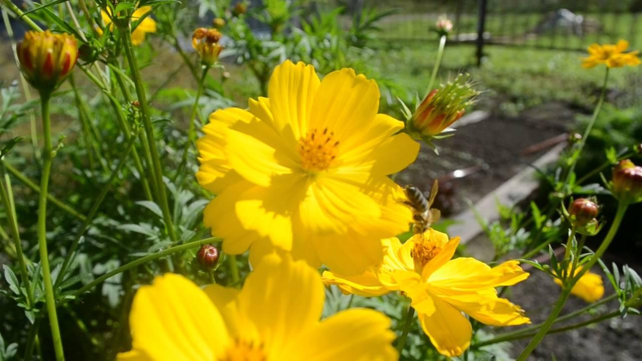 Цветы желтые