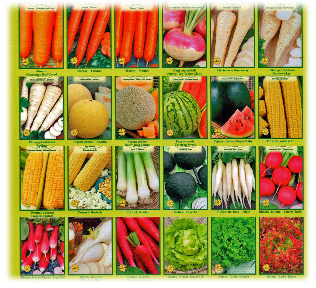 Овощи ассорти картинки