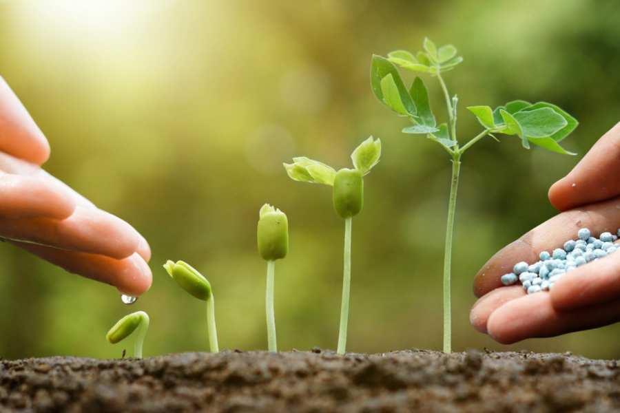Влияние удобрений на урожайность. Как правильно подкармливать растения?