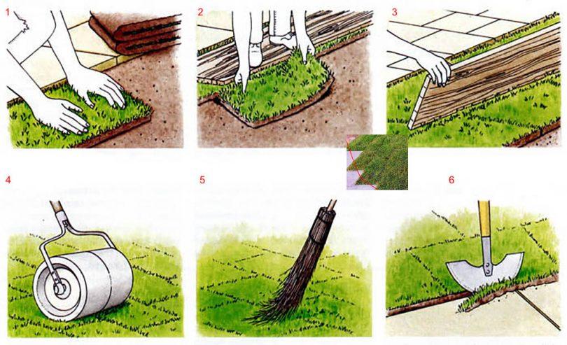 Газон своими руками инструкция