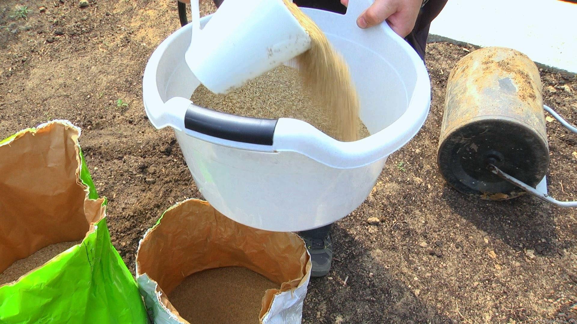 Как посадить газонную траву на даче своими руками 71