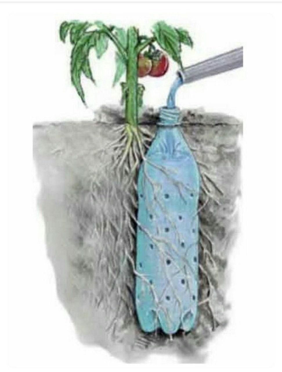 Как сделать школку для растений
