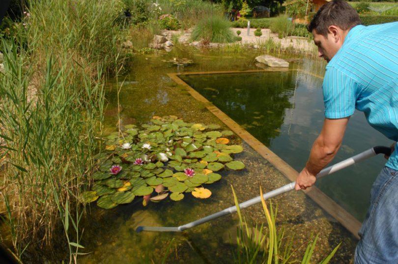 Как почистить озеро от водорослей